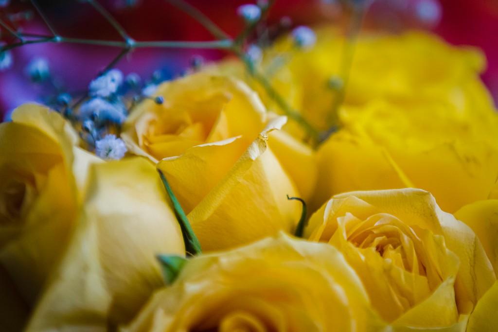 玫瑰花,内心祝福_图1-2