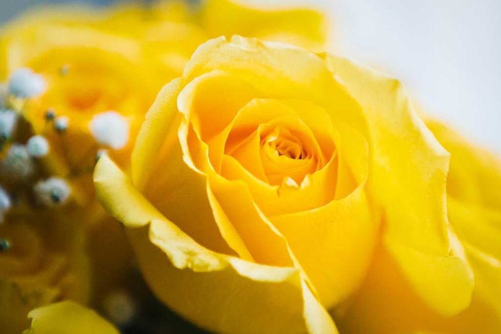 玫瑰花,内心祝福_图1-1