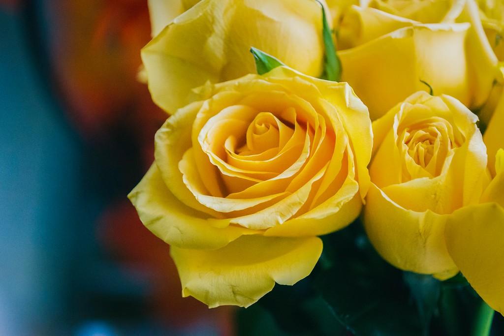 玫瑰花,内心祝福_图1-9