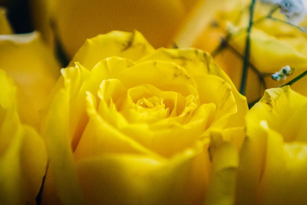 玫瑰花,内心祝福_图1-3