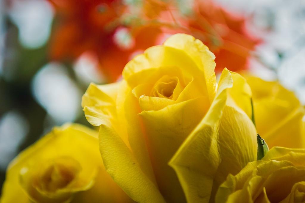 玫瑰花,内心祝福_图1-5