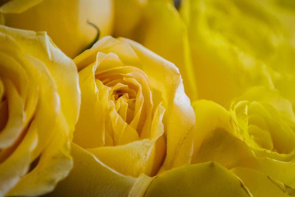 玫瑰花,内心祝福_图1-6