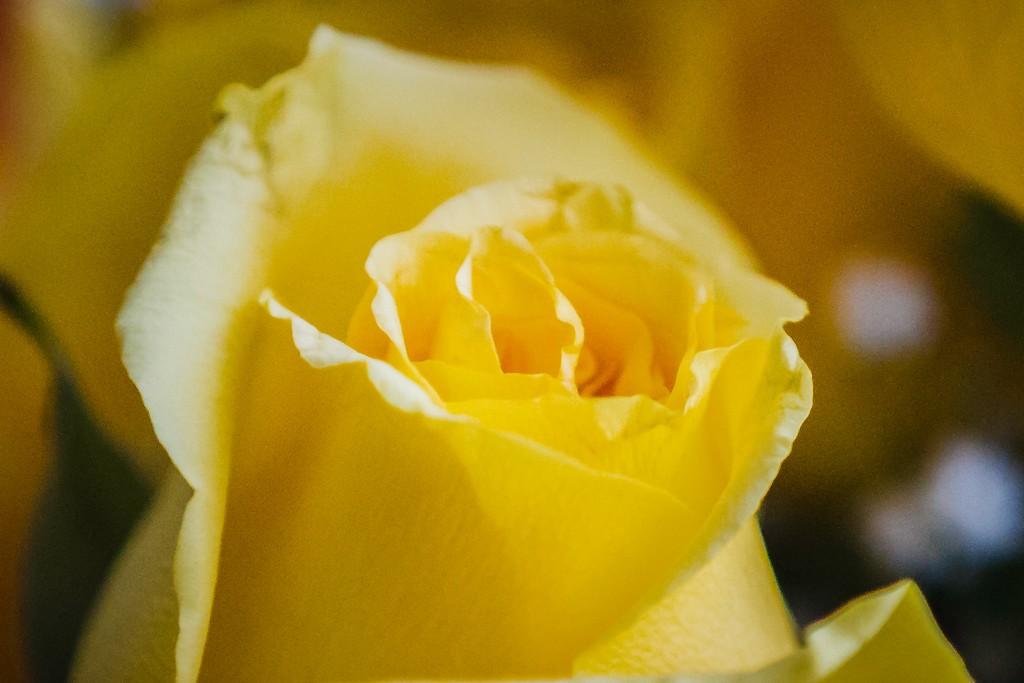 玫瑰花,内心祝福_图1-12