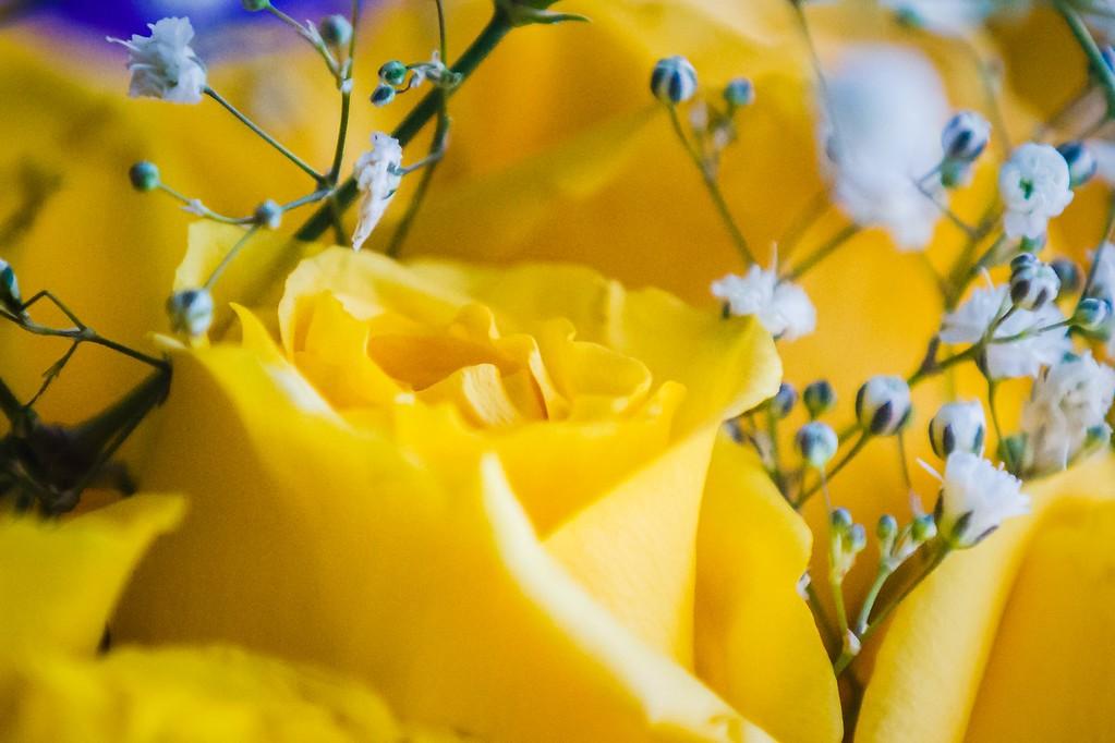 玫瑰花,内心祝福_图1-10