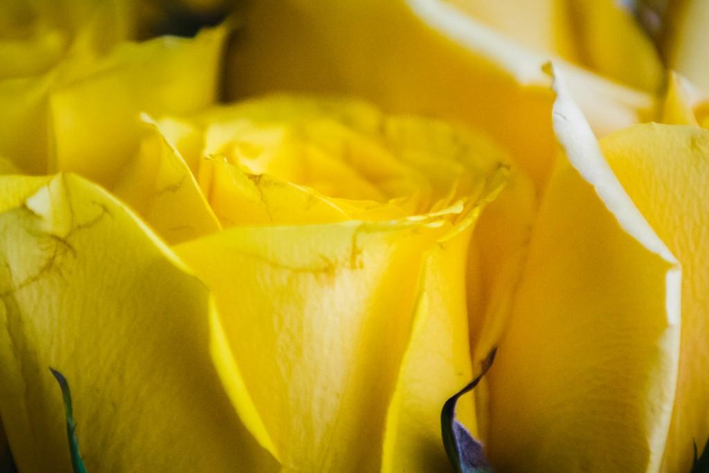 玫瑰花,内心祝福_图1-15