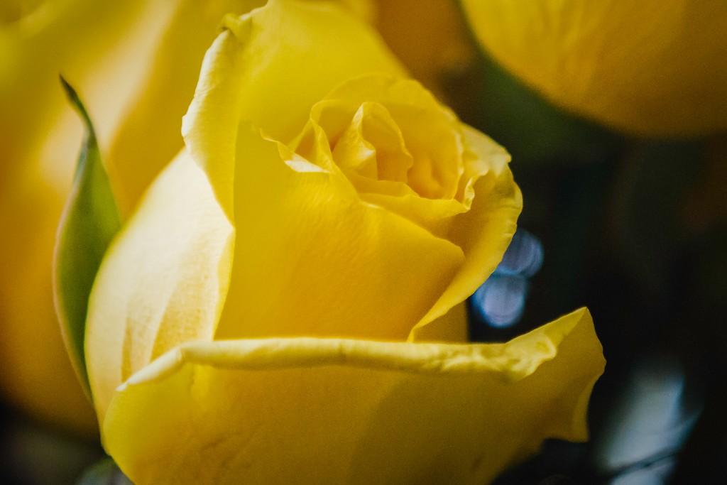 玫瑰花,内心祝福_图1-16