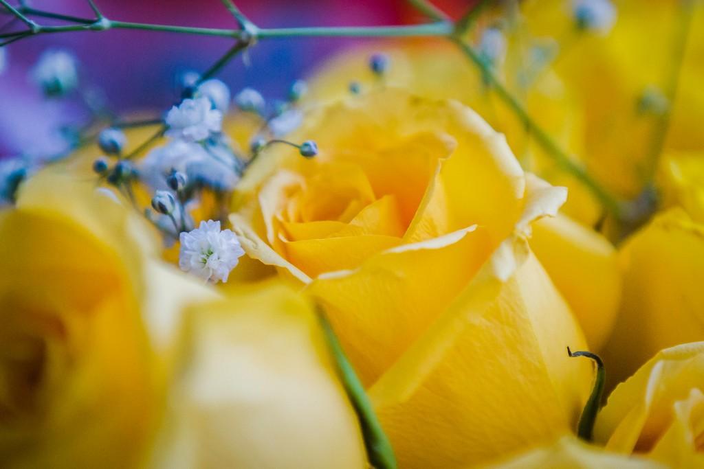 玫瑰花,内心祝福_图1-13