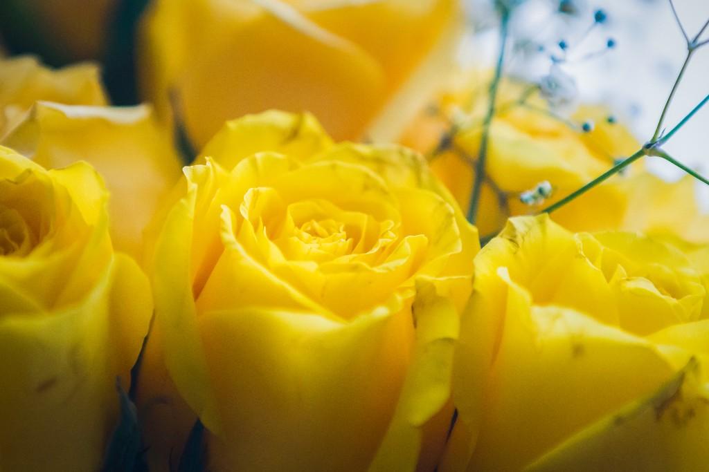 玫瑰花,内心祝福_图1-17