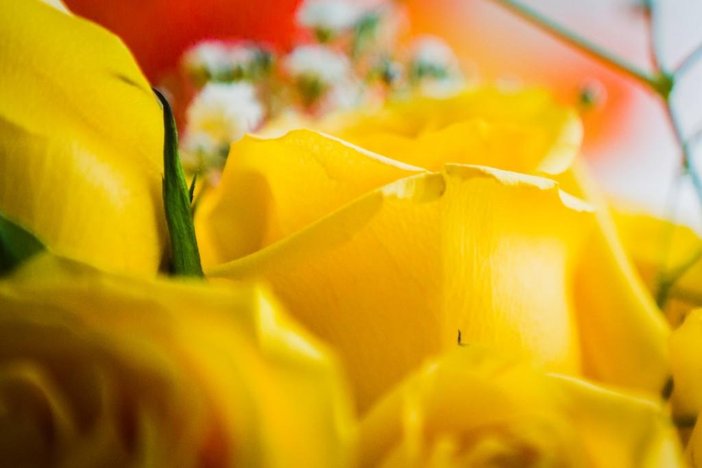 玫瑰花,内心祝福_图1-18
