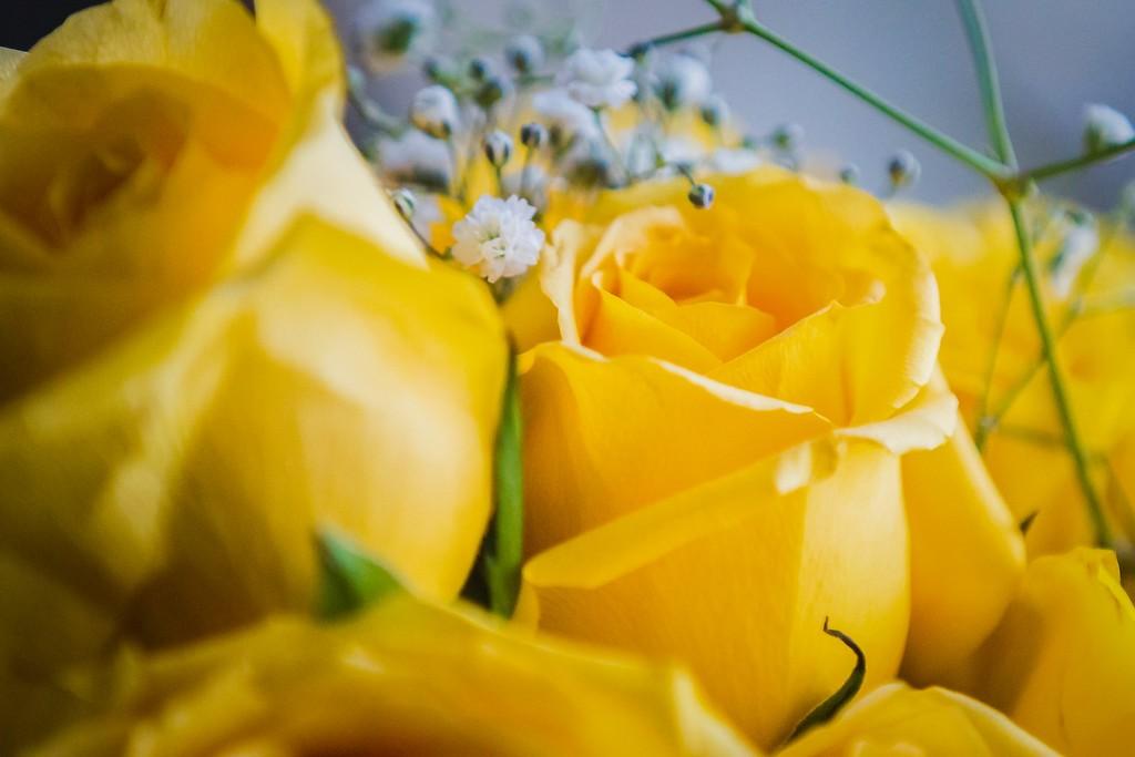 玫瑰花,内心祝福_图1-19