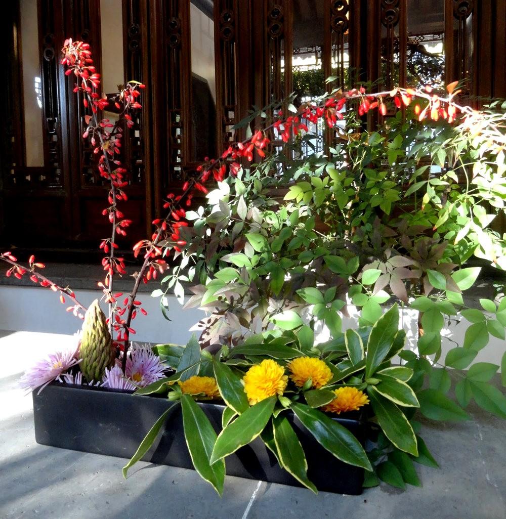 月亮花卉设计作品展.和菊花周年庆典_图1-17