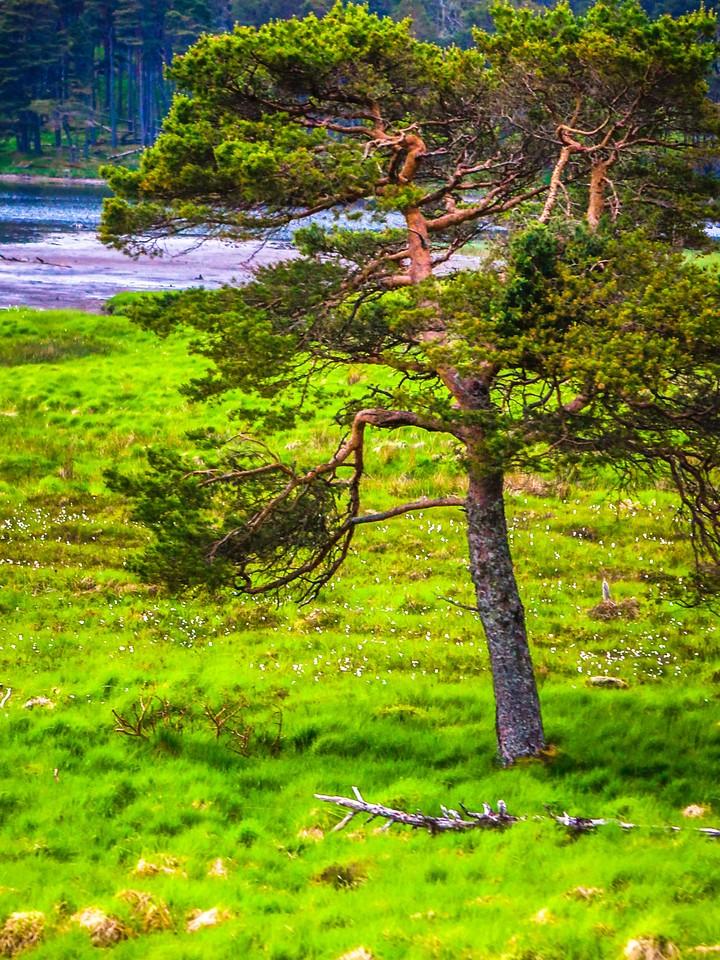 苏格兰美景,瞬间定格_图1-20