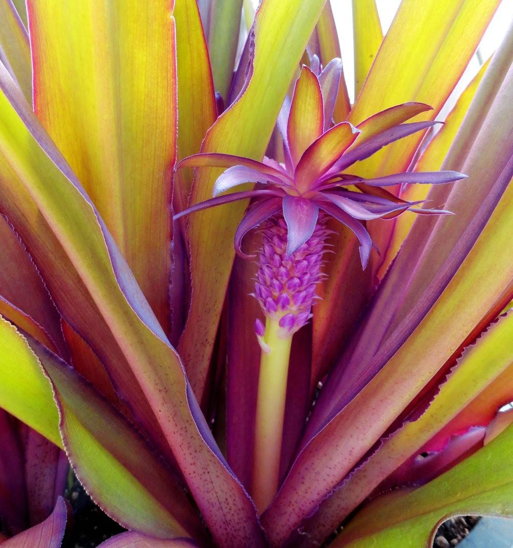 参观Rare Plant Research 苗圃花园_图1-1