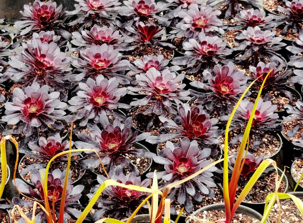 参观Rare Plant Research 苗圃花园_图1-6