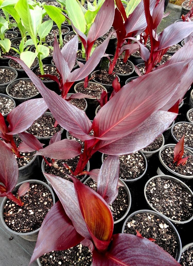 参观Rare Plant Research 苗圃花园_图1-12