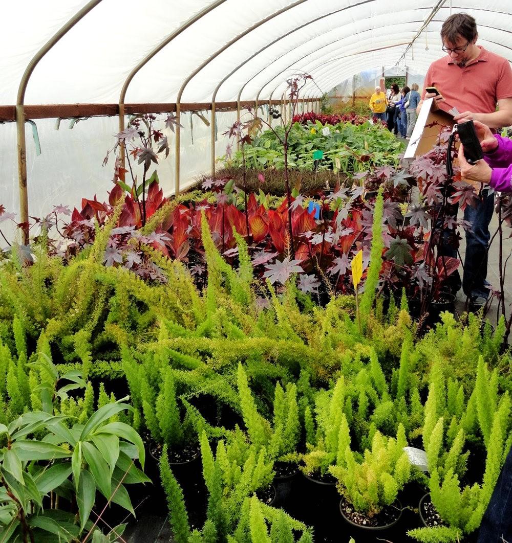 参观Rare Plant Research 苗圃花园_图1-13