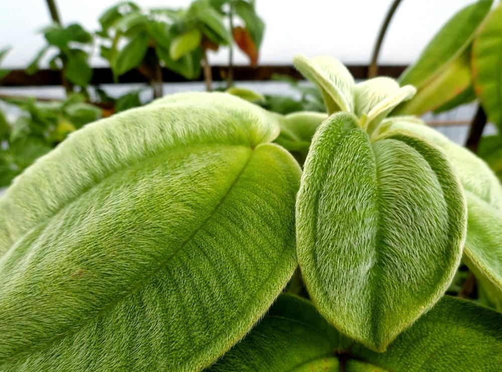 参观Rare Plant Research 苗圃花园_图1-16