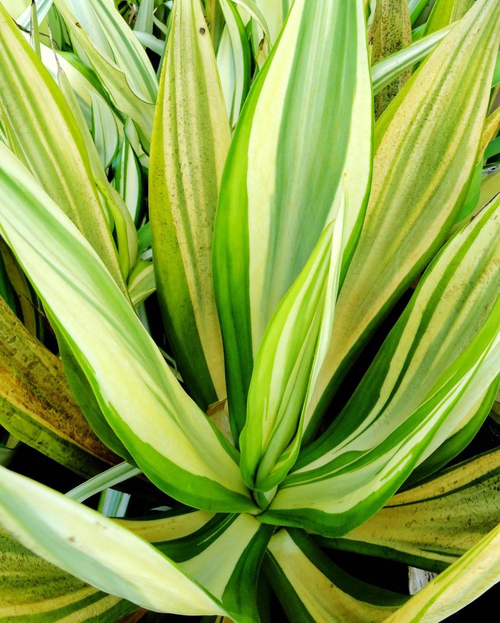 参观Rare Plant Research 苗圃花园_图1-17