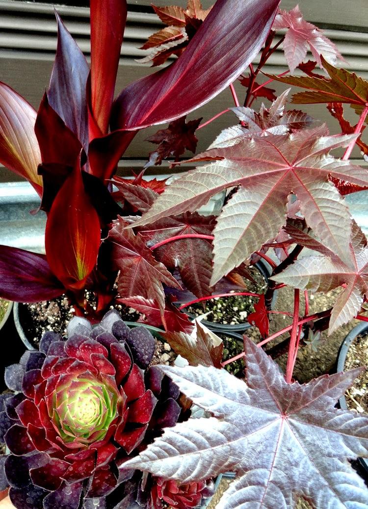 参观Rare Plant Research 苗圃花园_图1-32