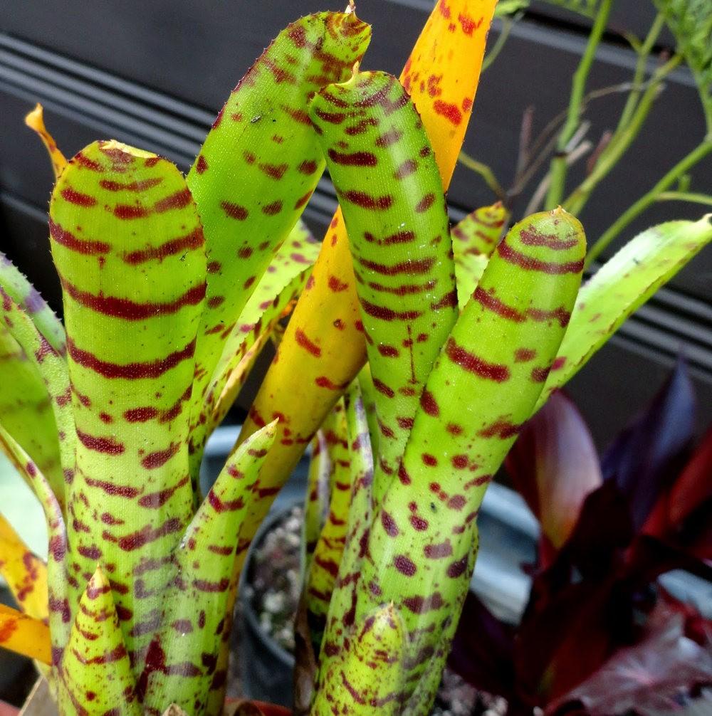 参观Rare Plant Research 苗圃花园_图1-34