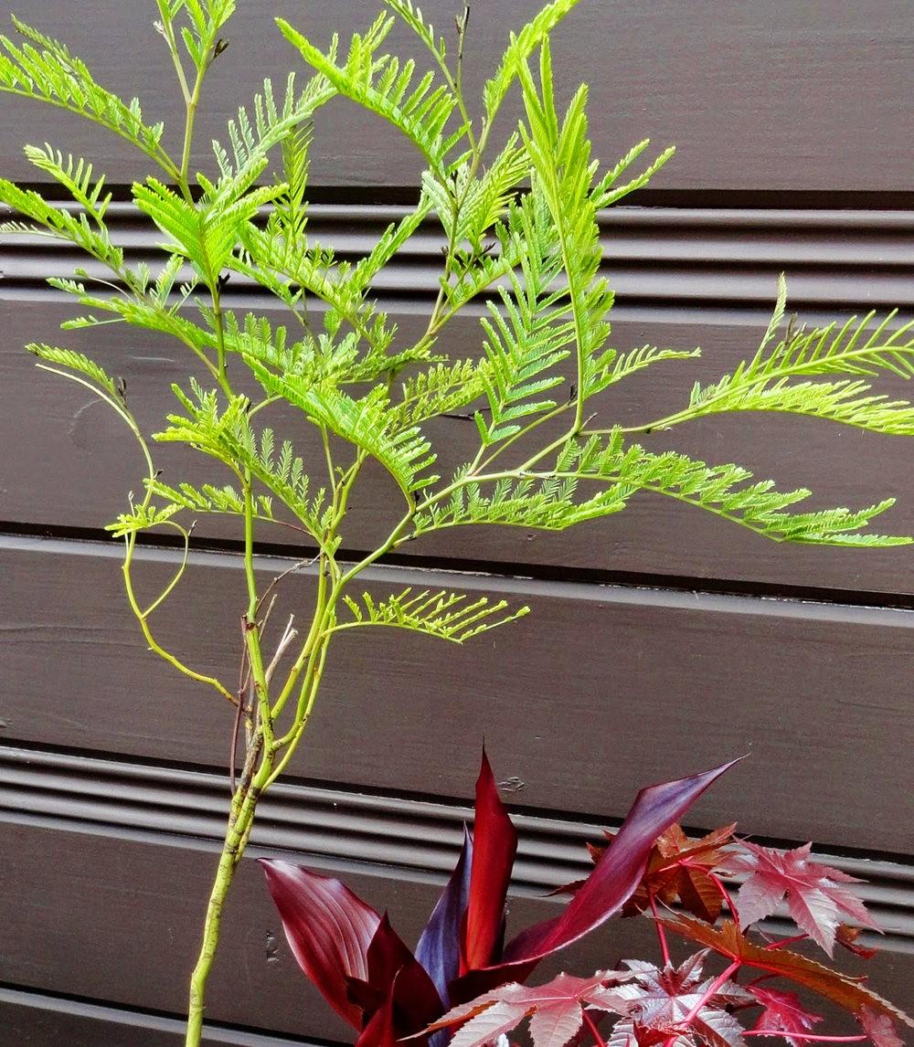 参观Rare Plant Research 苗圃花园_图1-35
