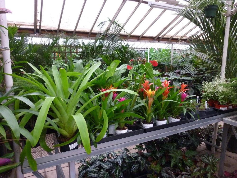 波特兰苗圃出售的室内观赏植物_图1-4