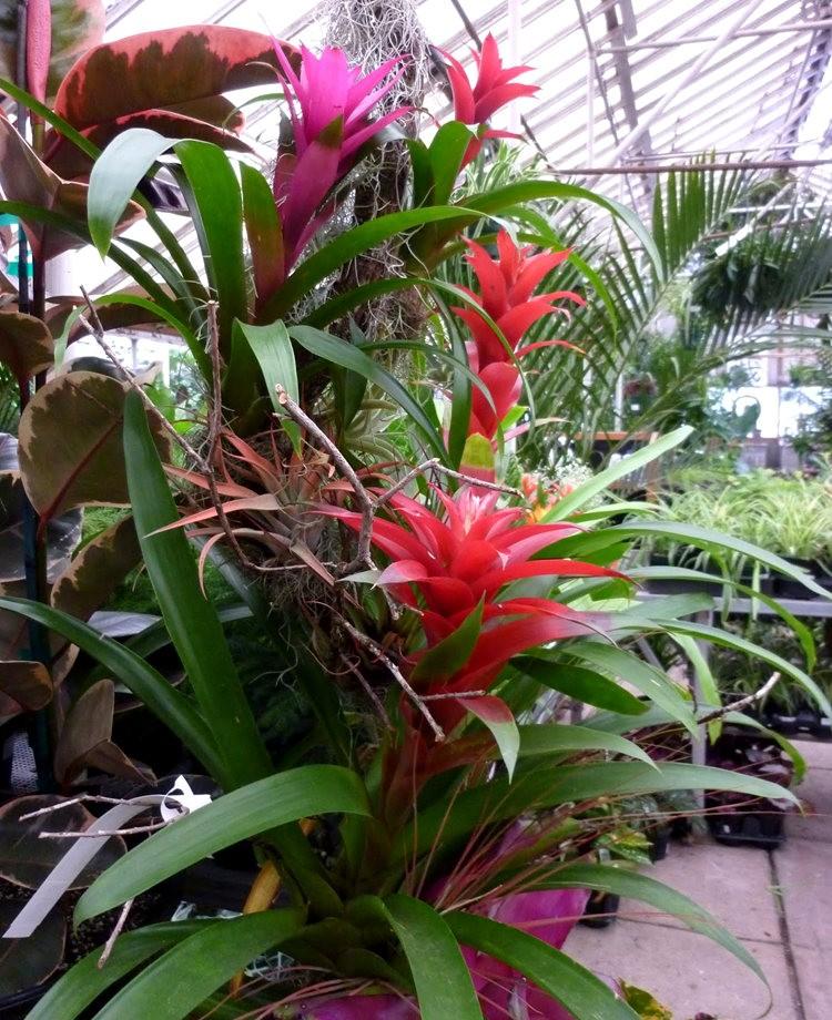 波特兰苗圃出售的室内观赏植物_图1-5