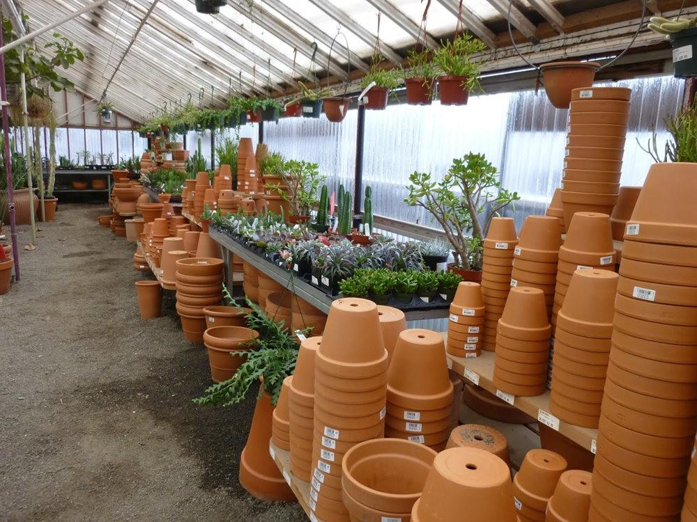 波特兰苗圃出售的室内观赏植物_图1-9