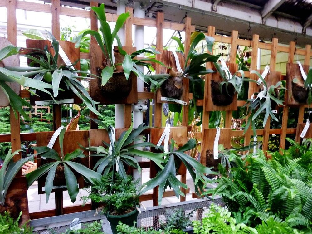 波特兰苗圃出售的室内观赏植物_图1-10