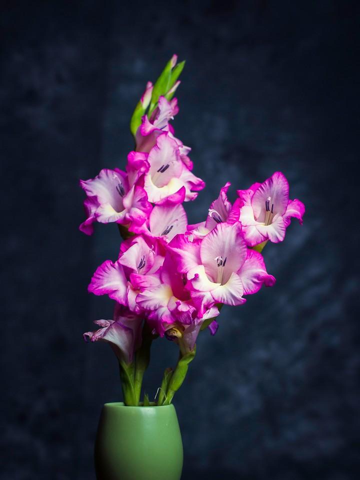 菖兰花,细细观赏_图1-1