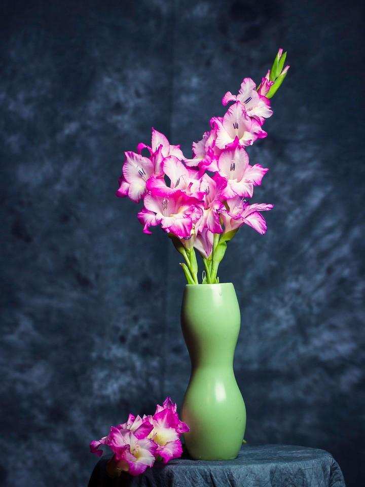 菖兰花,细细观赏_图1-4
