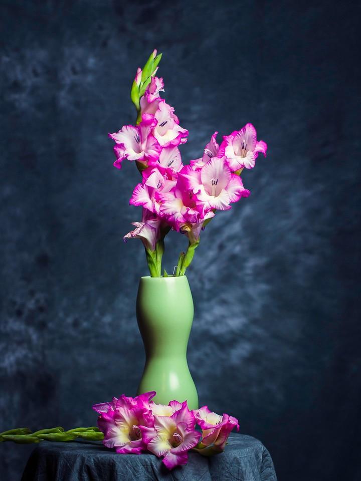 菖兰花,细细观赏_图1-8