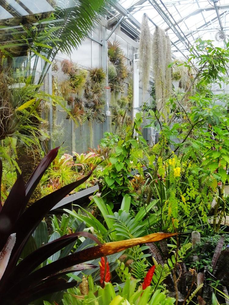 丹佛植物园的温室大棚_图1-6