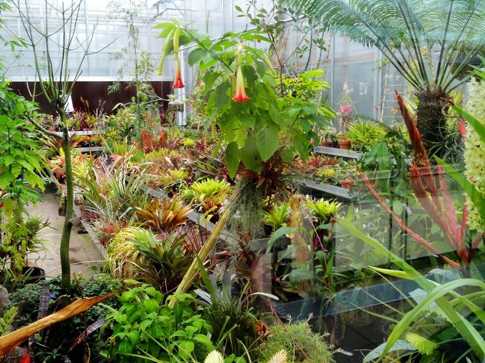丹佛植物园的温室大棚_图1-7