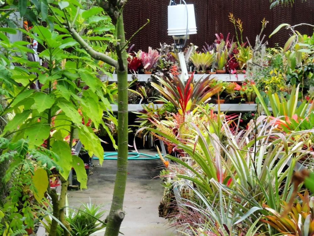 丹佛植物园的温室大棚_图1-8