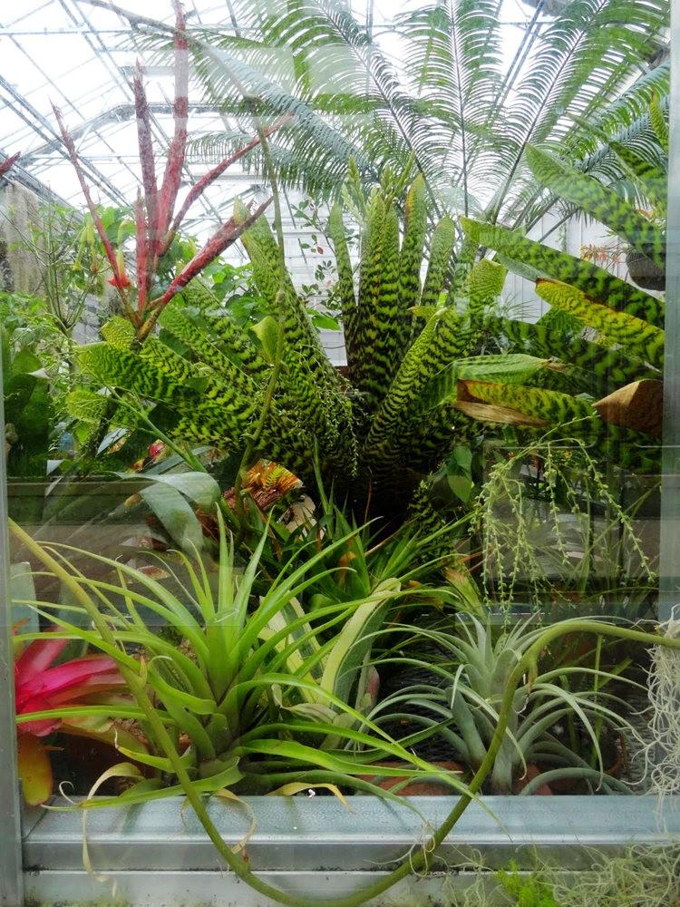 丹佛植物园的温室大棚_图1-9