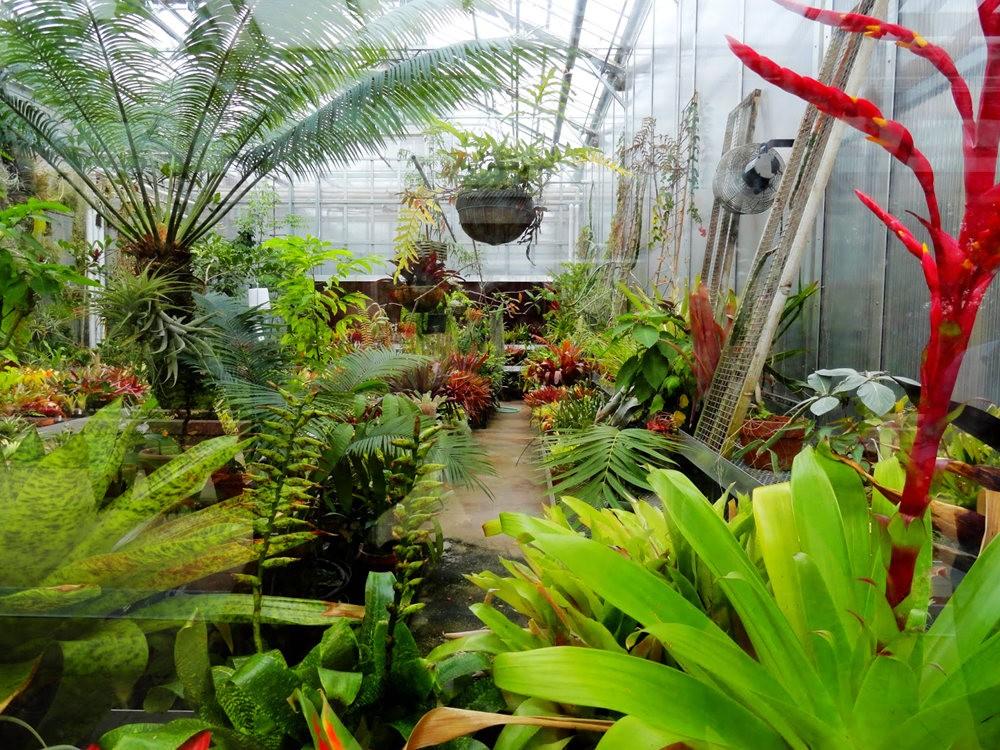 丹佛植物园的温室大棚_图1-11