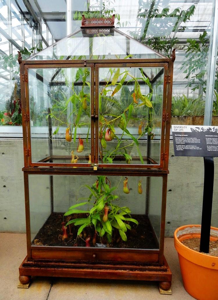 丹佛植物园的温室大棚_图1-12
