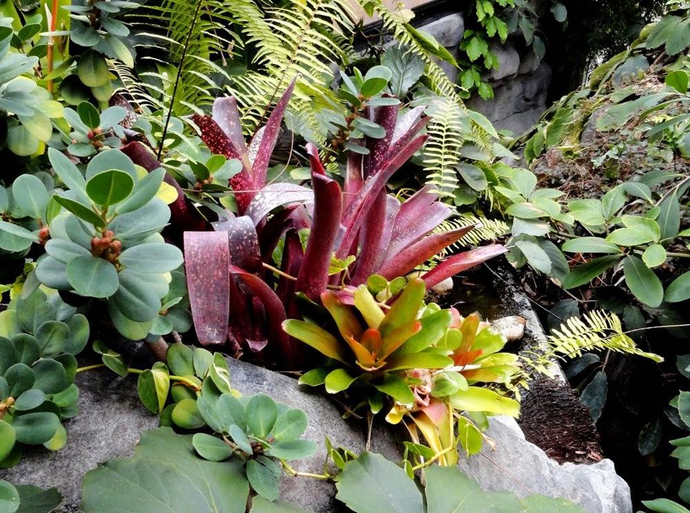 丹佛植物园的温室大棚_图1-17