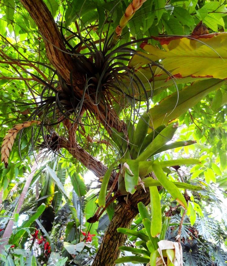 丹佛植物园的温室大棚_图1-18