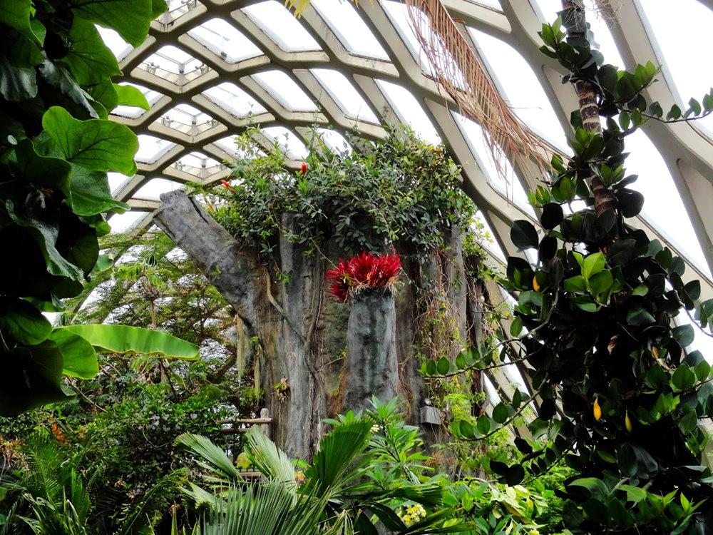 丹佛植物园的温室大棚_图1-23