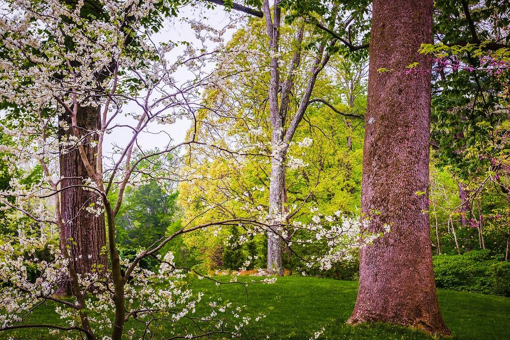 Chanticleer花园,刷新记忆_图1-13