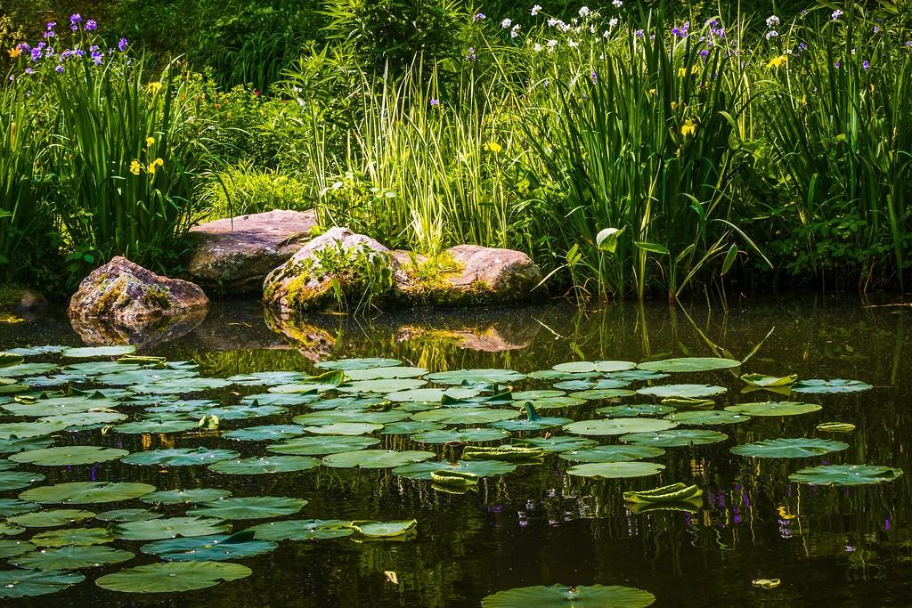 Chanticleer花园,刷新记忆_图1-24
