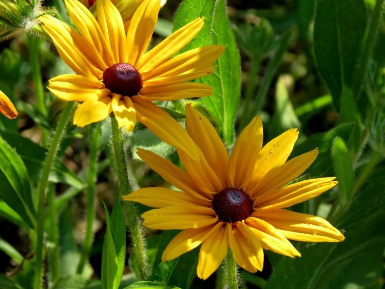 九月天的花----2_图1-2