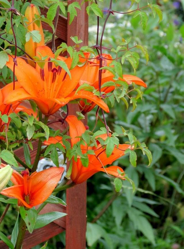 九月天的花----2_图1-6
