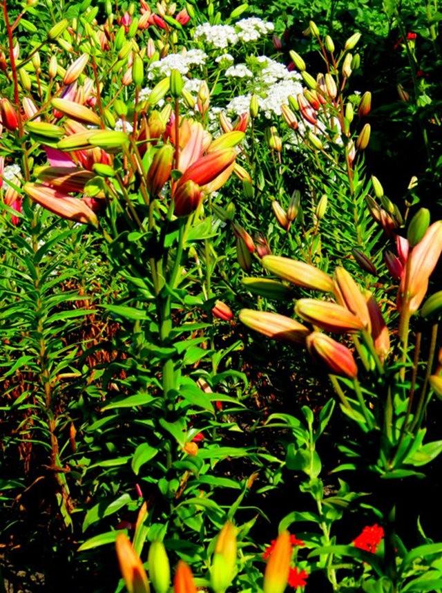 九月天的花----2_图1-7