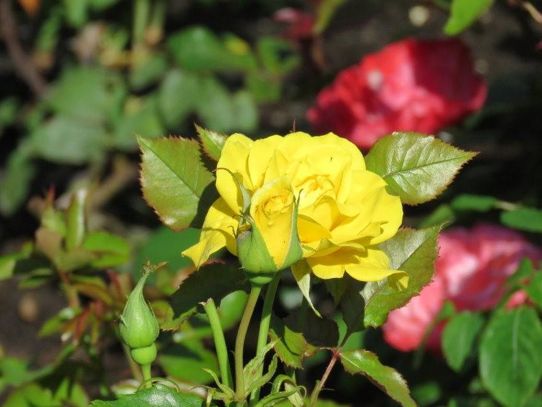 九月天的花----2_图1-8