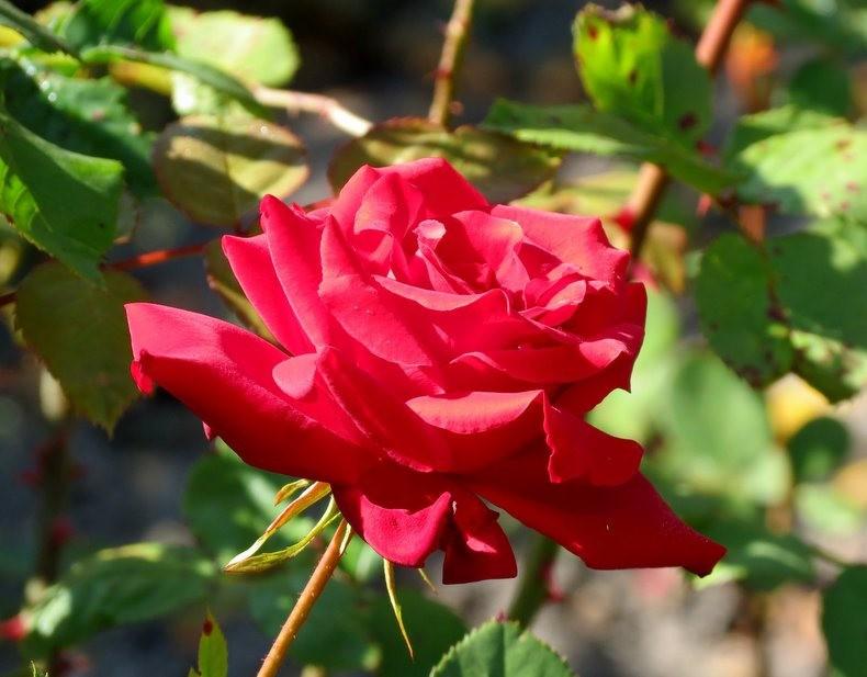 九月天的花----2_图1-9