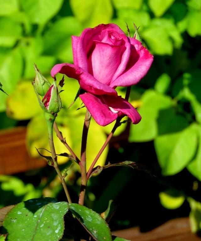 九月天的花----2_图1-11