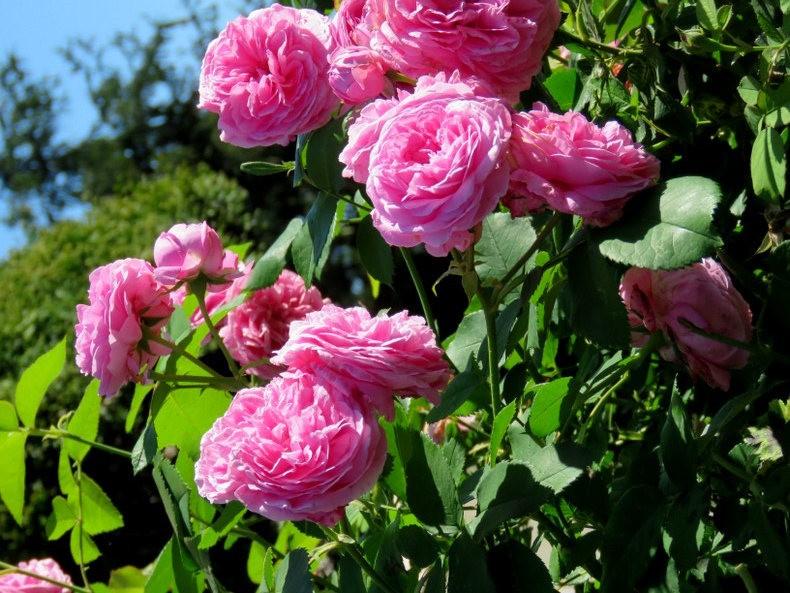 九月天的花----2_图1-12